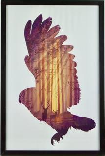 Eagle tavla/ tavla örn 40x60cm, ram ingår