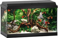 Juwel Aquarium Primo LED Starter Set 60 - noin 60 l, musta