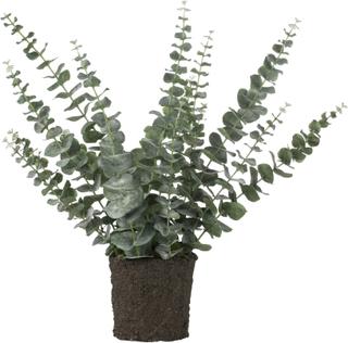 Flora eucalyptus støvet grøn