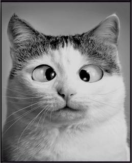 Cat Plakat