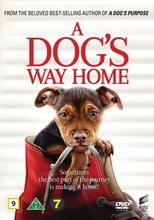 """A dog""""'s way home"""