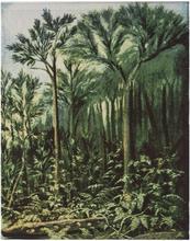 Botanic Bonad, 100x127