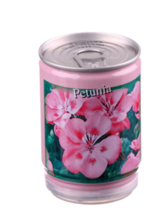 Konservväxter Petunia