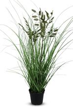 Konstväxt - Kvistgräs H60 cm