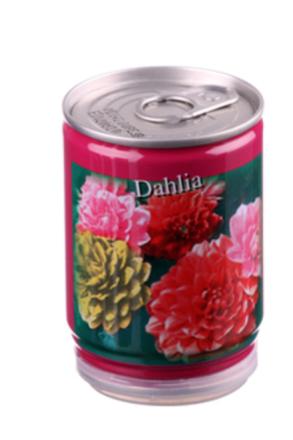 Konservväxter Dahlia