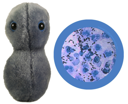 Giant Microbes Gonorr�