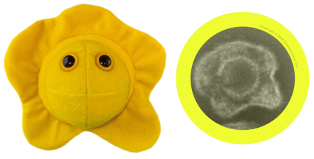 Giant Microbes Herpes