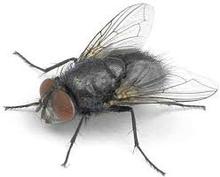 Spyfluer ca. 200 stk i bøtte