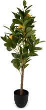 Konstväxt - Citronträd 90 cm