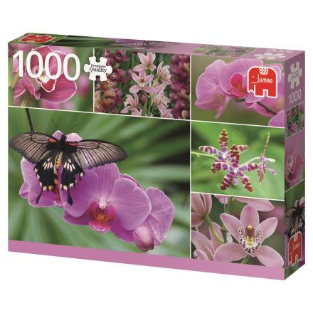 Orchids 1000 palaa