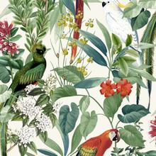DUTCH WALLCOVERINGS Tapet tropiska fåglar vit och grön