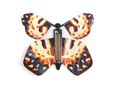 Butterfly Surprise