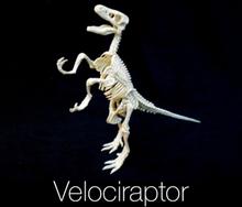 Dinosaur Kaivaussetti Velociraptor