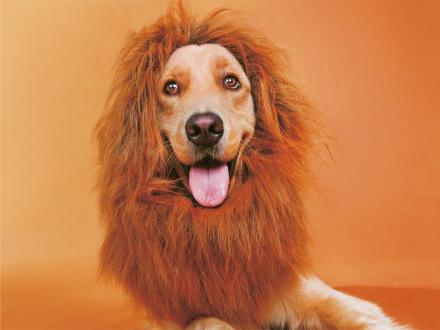 Hundens Løvemanke