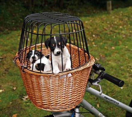 Cykelkorg hund
