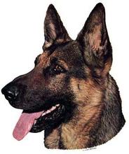 Hunddekal - Schäfer (huvud)