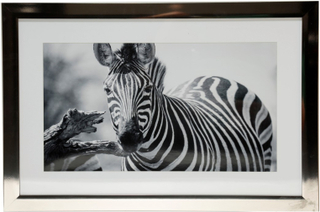 Tavla Zebra - 40x60 cm
