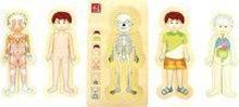 Puzzle Anatomie Tim