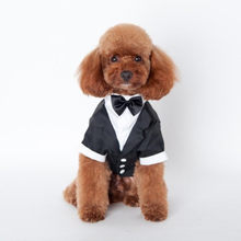 Hündchen Anzug in Gentleman-Stil