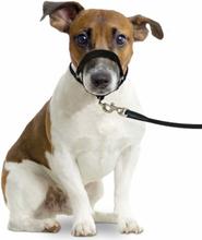 Nosgrimma hund, Easy Leader
