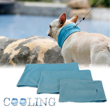 Kühles Hundehalsband