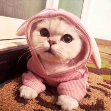 XS-XXL Schöne Kaninchen Ohr Haustier Hund Katze Pullover Teddy Kostüm Kleidung Für Herbst Winter