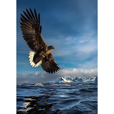 Hunting Eagle, 1000 brikker