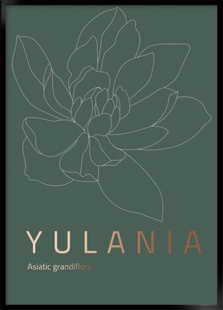yulania