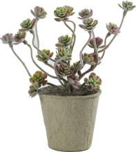 Kunstig grøn sukkulent plante