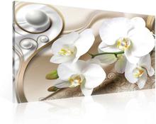 Tavla Pattern Floral Orchids Spheres
