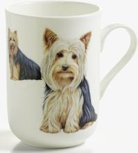 Mugg hund Yorkshire Terrier