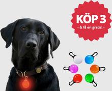 Hundelampe til kjæledyr (Farge: Rød)
