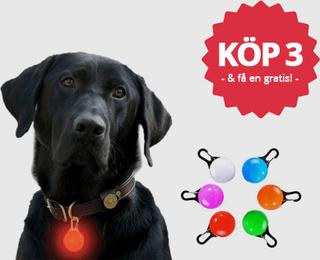 Hunde-/kæledyrslygte (Färg: Blå)