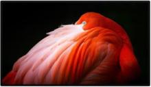 Skærm Pro Display XDR Nano-texture glass -