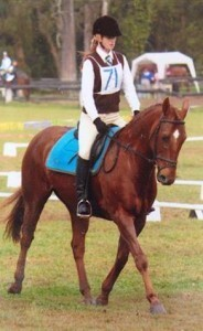 Den Perfect All Rounder Gelding Horse Available