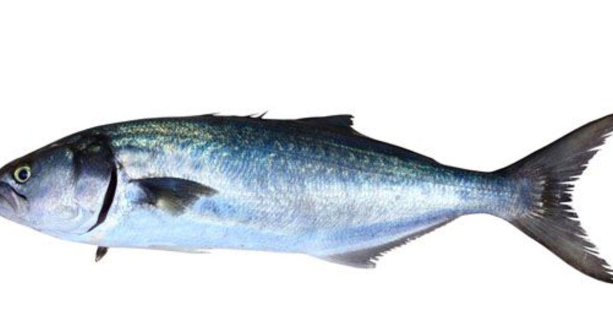 Ricette di come cucinare il pesce serra mytaste - Come cucinare il pesce serra ...