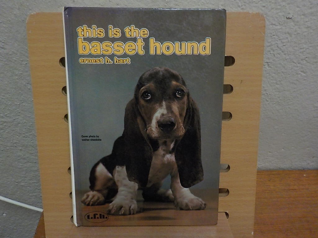 This is the basset hound